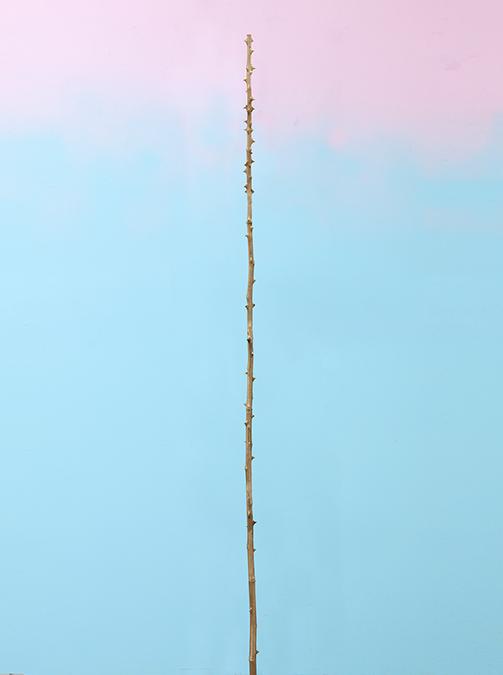 Thorn long single3lo